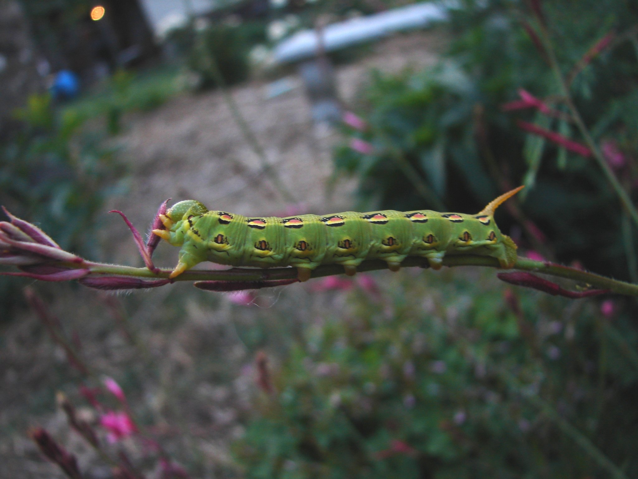Cool Caterpillar